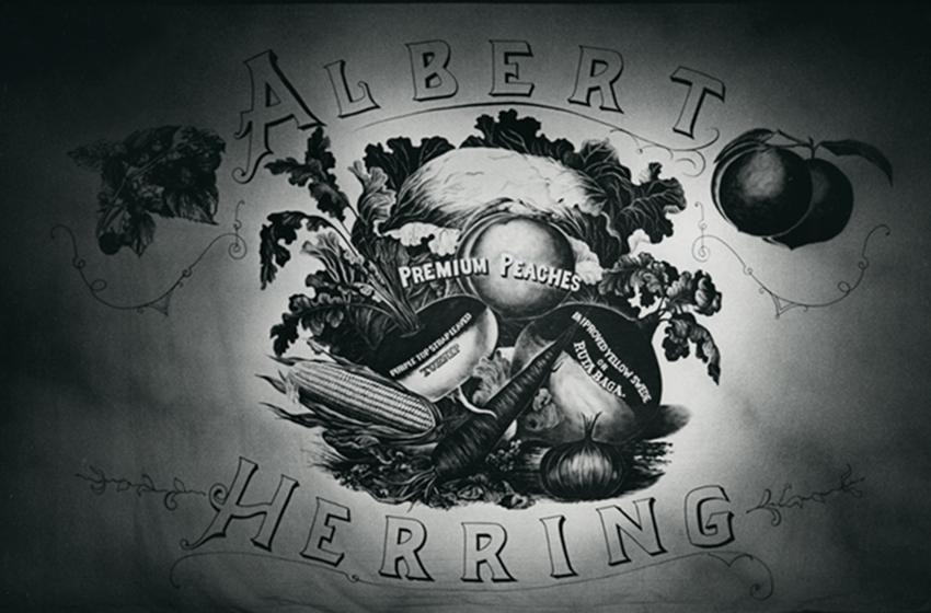 Herring3